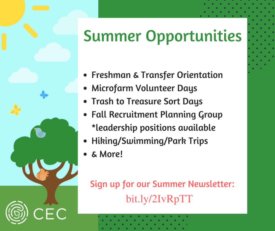 Summer Opportunities Newsletter Graphic (1)